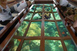 Кораллы. Вид через прозрачное дно