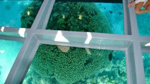 Подводный мир Красного моря. Вид через прозрачное дно.