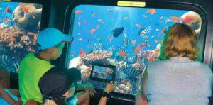 Подводный мир Красного моря из иллюминатора батискафа