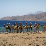 Прогулка на верблюдах на экскурсии Цветной каньон