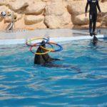 Дельфин выполняет трюк с обручами