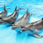 Дельфины из дельфинария в Шарм-эль-Шейхе