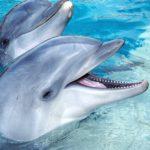 Дельфин улыбается