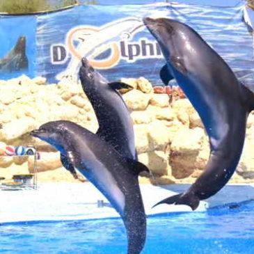 Дельфинарий в Шарм-эль-Шейхе