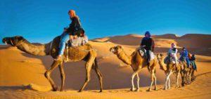 Мега сафари из Шарм эль Шейха