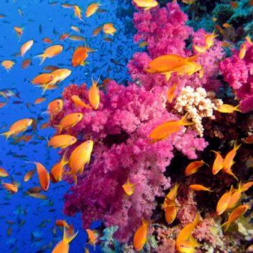 Жизнь кораллового рифа в Красном море