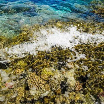 Влияние волн на сноркелинг в Красном море