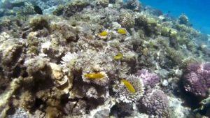 Умирающий коралловый риф