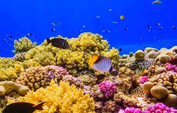Живой коралловый риф в Красном море