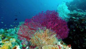 Горгонария, живущая в Красном море