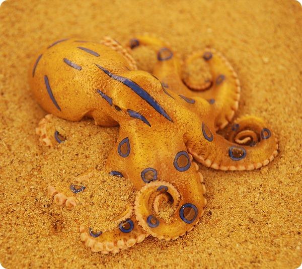 Синеполосный осьминог