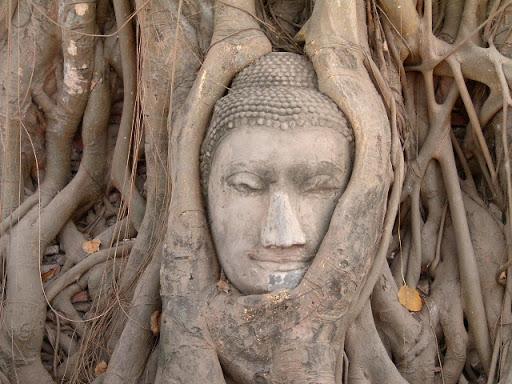 Голова Будды в корнях дерева Бодхи