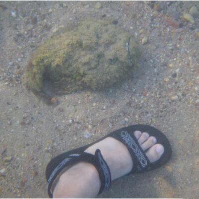 Бородавчатка рядом с побережьем Гоа. Источник  doublenamefish.ru