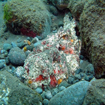 Рыба-камень: самая ядовитая рыба в мире